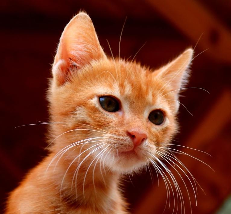 Täytyy rakastaa kissojen dating site