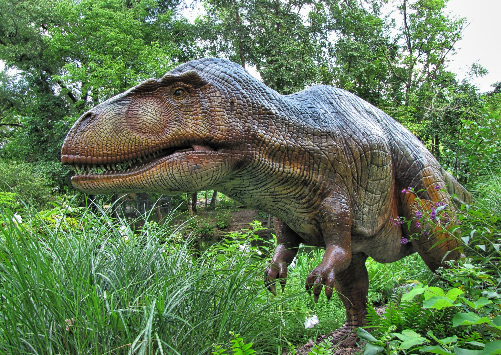 Sauropodit