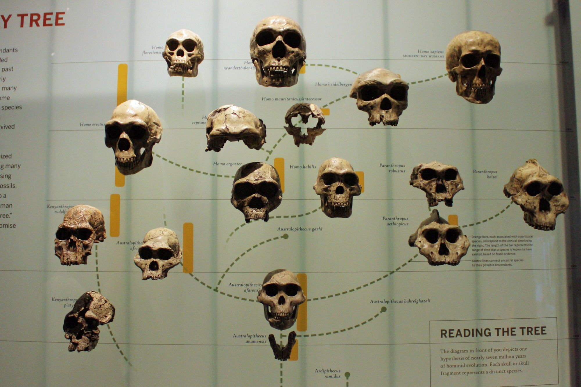 dating ihmisen fossiileja olla tyytyväinen itse ennen dating lainaus merkit