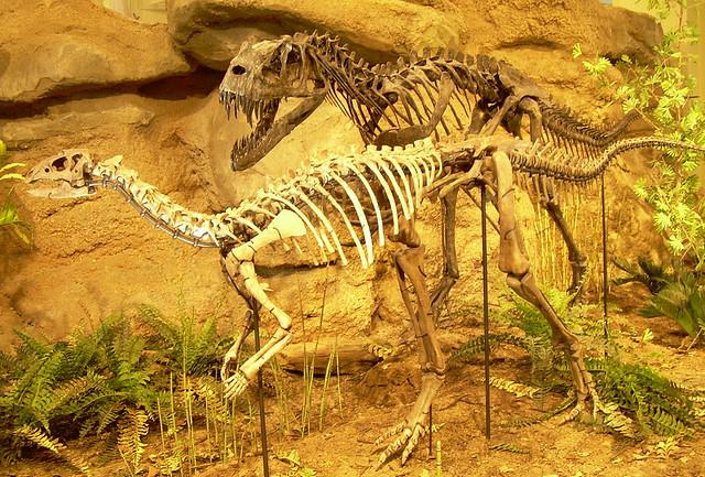 Dryosaurus and Ceratosaurus