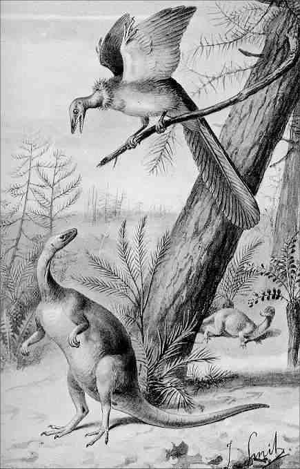 Matelijat ja linnut