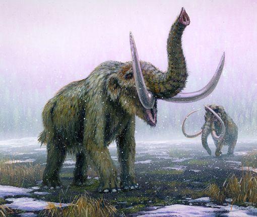 Amerikan mastodontti ja villamammutti