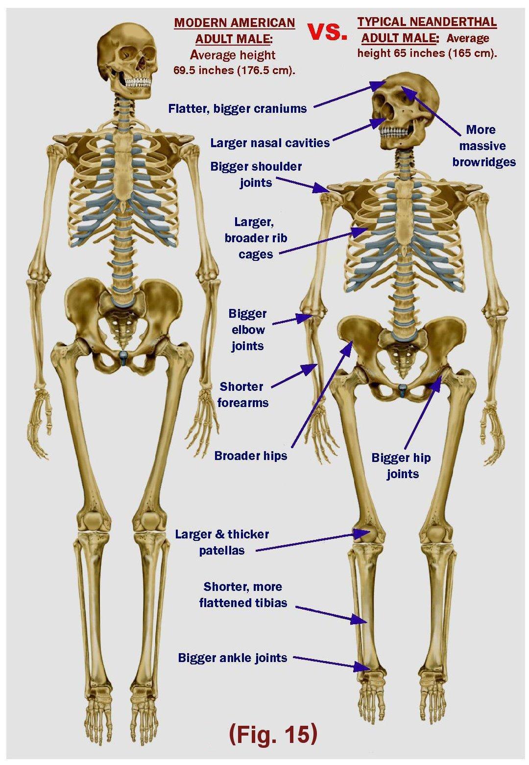 Neandertalinihminen ja nykyihminen