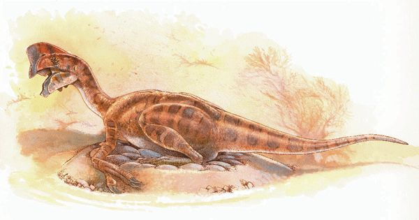 oviraptori