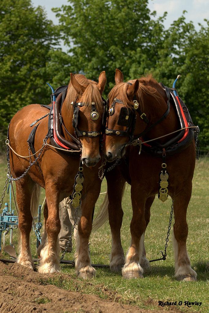 Painavin hevonen