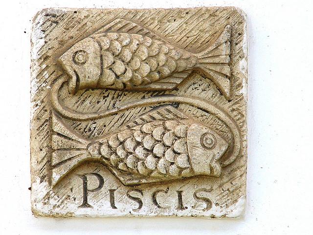 kauris ja kalat ammatinvalintatesti