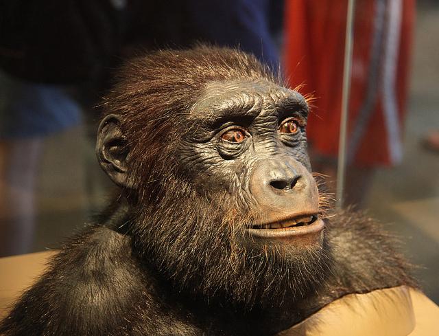 Apinaihminen
