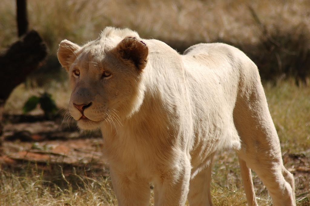 pasianssit leijona ja skorpioni
