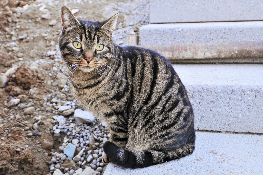Kissa Ahmii Ja Oksentaa