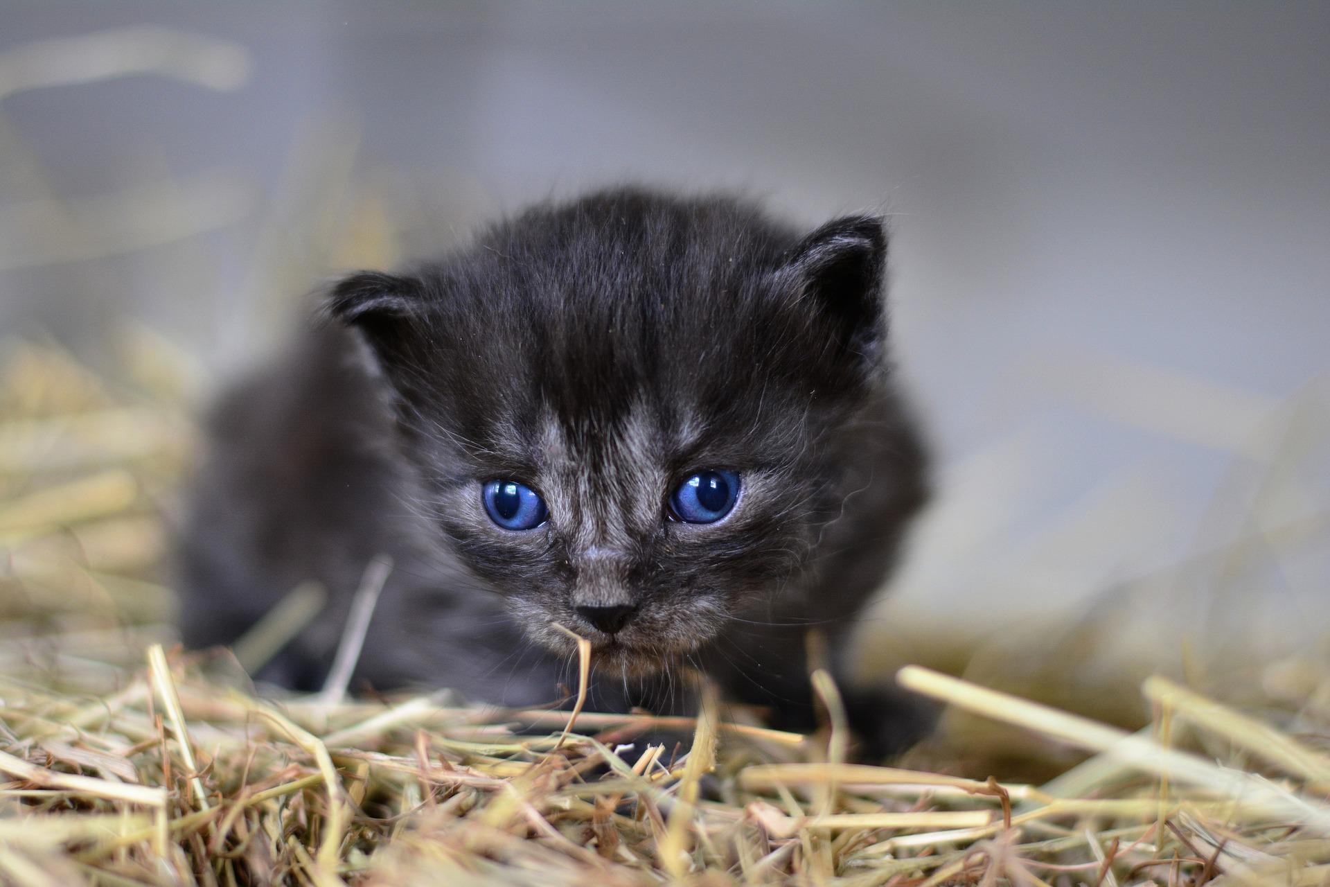 Kissan Mouruaminen