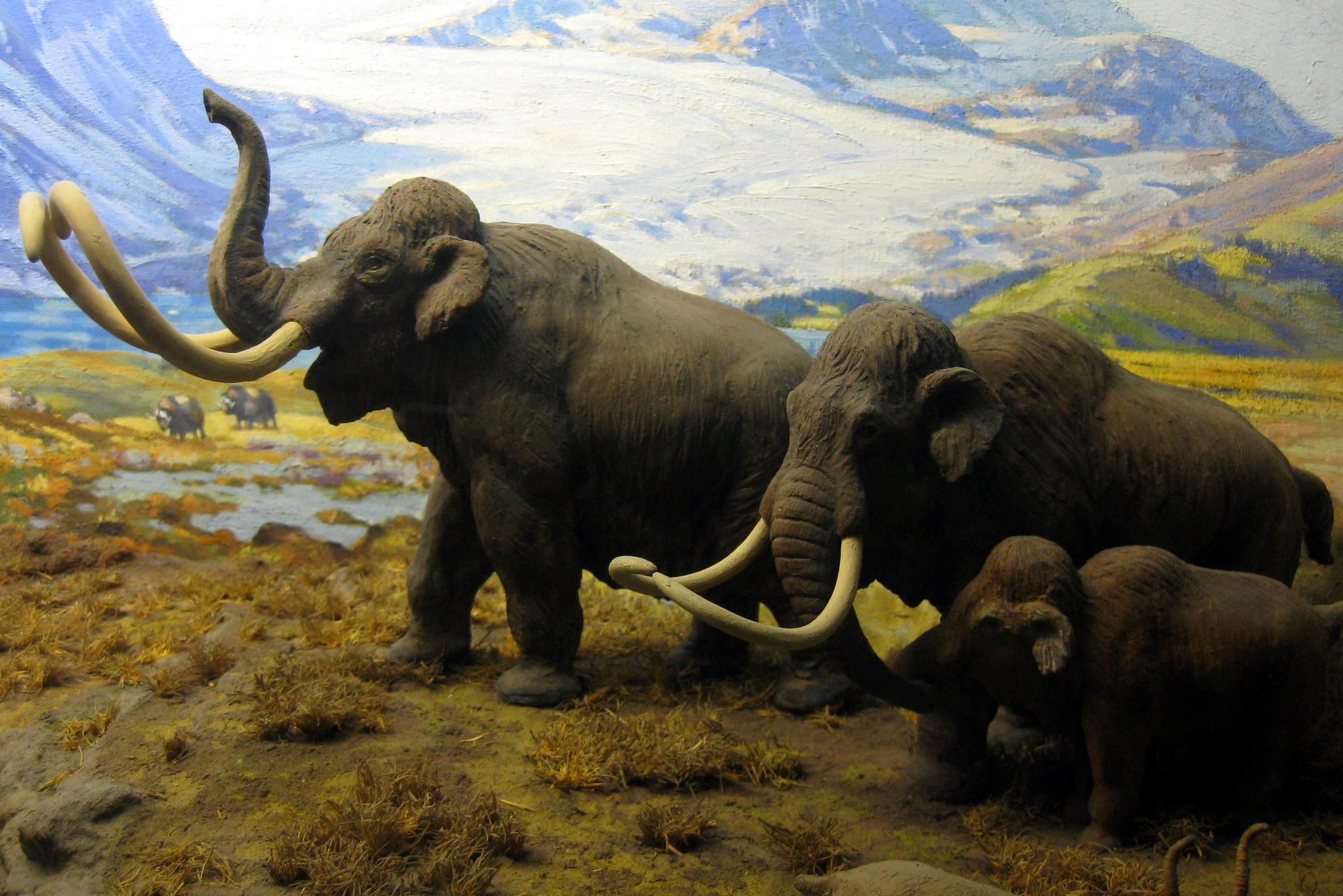 Mammutit