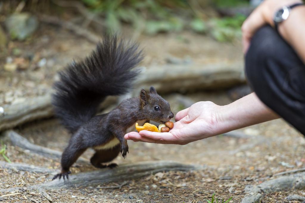 oravan ravinto kesällä